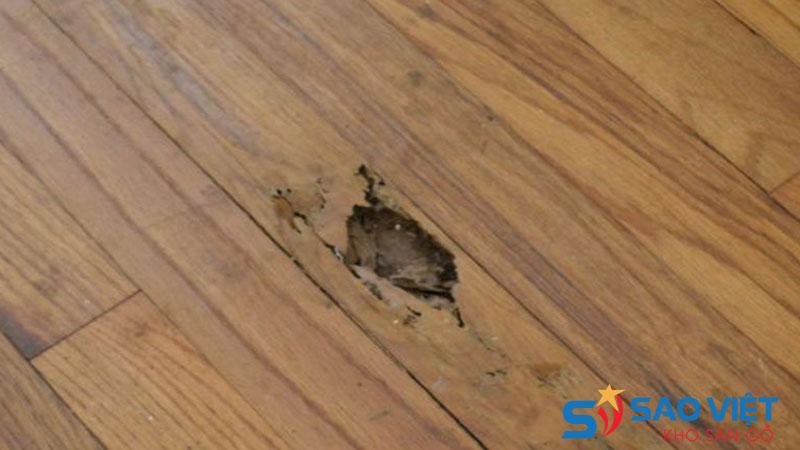 Hiện tượng sàn gỗ công nghiệp giá rẻ bị mối mọt